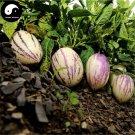 Buy Melon Eggplant Fruit Seeds 120pcs Plant Ginseng Fruit Solanum Muricatum Aiton