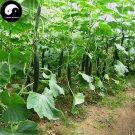 Buy Cucumber Gourd Vegetable Seeds 400pcs Plant Cucumis Sativus Fruit Melon