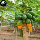 Buy Papaya Fruit Seeds 240pcs Plant Pawpaw Fruit Tree Chaenomeles Sinensis