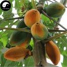 Buy Papaya Fruit Seeds 120pcs Plant Pawpaw Fruit Tree Chaenomeles Sinensis