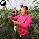 Buy Loofah Vegetable Seeds 120pcs Plant Luffa Cylindrica Melon Loofah