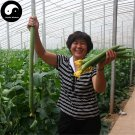 Buy Loofah Vegetable Seeds 240pcs Plant Luffa Cylindrica Melon Loofah