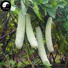 Buy White Bitter Gourd Vegetable Seeds 120pcs Plant Momordica Charantia Bitter Melon