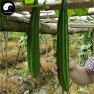 Buy Leng Loofah Vegetable Seeds 60pcs Plant Luffa Cylindrica Melon Loofah