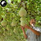 Buy Calabash Gourd Seeds 240pcs Plant Melo Lagenaria Siceraria Bottle Gourd
