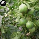 Buy Cucumis Melon Seeds 120pcs Plant Sugar Melon Sweet Muskmelon