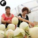 Buy White Cucumis Melon Seeds 120pcs Plant Sugar Melon Sweet Muskmelon