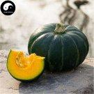 Buy Japaness Pumpkin Seeds 120pcs Plant Diabetes Vegetable Melon Cucurbita Moschata