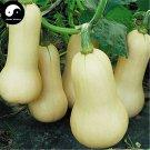 Buy Cream Pumpkin Seeds 120pcs Plant Diabetes Vegetable Melon Cucurbita Moschata