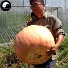 Buy Huge Pumpkin Seeds 60pcs Plant Diabetes Vegetable Melon Cucurbita Moschata