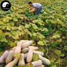 Buy Honey Pumpkin Seeds 120pcs Plant Diabetes Vegetable Melon Cucurbita Moschata