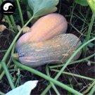 Buy Honey Pumpkin Seeds 30pcs Plant Diabetes Vegetable Melon Cucurbita Moschata