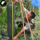 Buy Big Benincasa Hispida Seeds 50pcs Plant Melon  Vegetable Black Benincasa Hispida