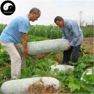Buy Big Benincasa Hispida Seeds 200pcs Plant Melon Vegetable White Benincasa Hispida