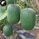 Buy Benincasa Hispida Seeds 200pcs Plant Melon Vegetable Green Benincasa Hispida