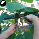 Buy Fruit Cucumber Seeds 100pcs Plant Melon Vegetable Cucumis Sativus