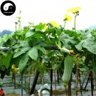 Buy Short Loofah Melon Seeds 100pcs Plant Melon Vegetable Luffa Cylindrica