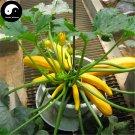 Buy Curuba Banana Melon Seeds 120pcs Plant Melon Vegetable Cassabanana Gourd
