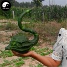 Buy Calabash Gourd Seeds 20pcs Plant Melon Vegetable Crane Head Bottle Gourd