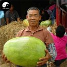 Buy Watermelon Fruit Seeds 60pcs Plant Citrullus Lanatus Big Red Meat Watermelon