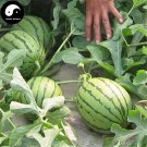 Buy Watermelon Fruit Seeds 200pcs Plant Citrullus Lanatus Small Red Meat Watermelon