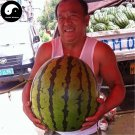 Buy Watermelon Fruit Seeds 50pcs Plant Citrullus Lanatus Big Round Watermelon