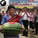 Buy Watermelon Fruit Seeds 200pcs Plant Citrullus Lanatus Big King Watermelon