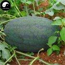 Buy Watermelon Fruit Seeds 50pcs Plant Citrullus Lanatus Black Beauty Watermelon
