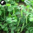 Buy Snow Peas Vegetable Seeds 100pcs Plant Green Dutch Beans Pisum Sativum