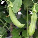 Buy Snow Peas Vegetable Seeds 50pcs Plant Sweet Beans Lathyrus Odoratus