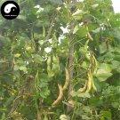 Buy White Kidney Beans Vegetable Seeds 200pcs Plant Phaseolus Vulgaris White Beans