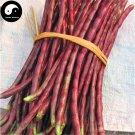 Buy Red Long Beans Vegetable Seeds 200pcs Plant Cowpea Vigna Unguiculata