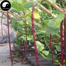 Buy Red Long Beans Vegetable Seeds 100pcs Plant Cowpea Vigna Unguiculata