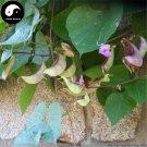 Buy Purple Lentils Beans Vegetable Seeds 50pcs Plant Hyacinth Bean Lablab Purpureus