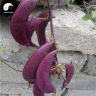 Buy Purple Moon Beans Vegetable Seeds 50pcs Plant Lentils Bean Lablab Purpureus