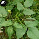 Buy Green Bean Vegetable Seeds 600pcs Plant Chinese Bean Vigna Radiata