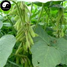 Buy Yellow Soya Bean Vegetable Seeds 400pcs Plant Chinese Bean Glycinemax