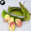 Buy Color Kidney Beans Vegetable Seeds 120pcs Plant Chinese Bean Phaseolus Vulgaris