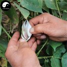Buy Color Kidney Beans Vegetable Seeds 30pcs Plant Chinese Bean Phaseolus Vulgaris