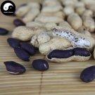 Buy Black Peanut Fruit Seeds 60pcs Plant Chinese Earth Bean Groundnut Arachis Hypogaea