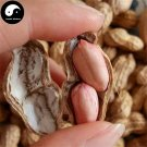 Buy Red Peanut Fruit Seeds 30pcs Plant Chinese Earth Bean Groundnut Arachis Hypogaea