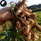 Buy Red Peanut Fruit Seeds 120pcs Plant Chinese Earth Bean Groundnut Arachis Hypogaea