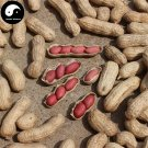Buy Red Skin Peanut Fruit Seeds 30pcs Plant Chinese Earth Bean Groundnut Arachis Hypogaea