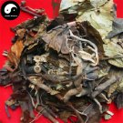 Glabrous Sarcandra Herb 200g Dried Herba Sarcandrae Chinese Zhong Jie Feng 肿节风
