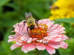 Buzzy Lil' Bee Photo Card