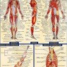 Human Anatomy All System Body Map Art 32x24 Poster Decor