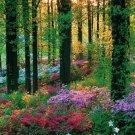 Flower Forest Art 32x24 Poster Decor