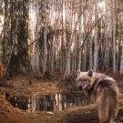 Wolf Highlands Wild Nature Animals Art 32x24 Poster Decor