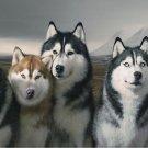 Siberian Husky Art 32x24 Poster Decor