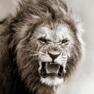 Fire Lion Animal Art 32x24 Poster Decor